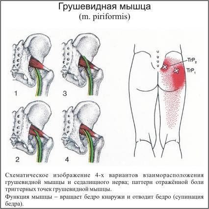 Лечение артрита алое